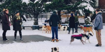 People with their dogs in the park.