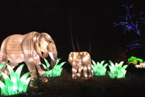 Zoo Lights at Smithsonian's National Zoo