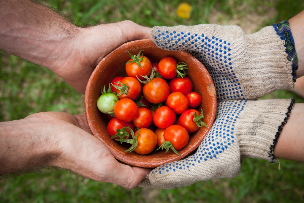 A bowl of tomatoes being handed from one person to another