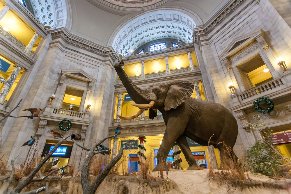 Museum of Natural History, elephant