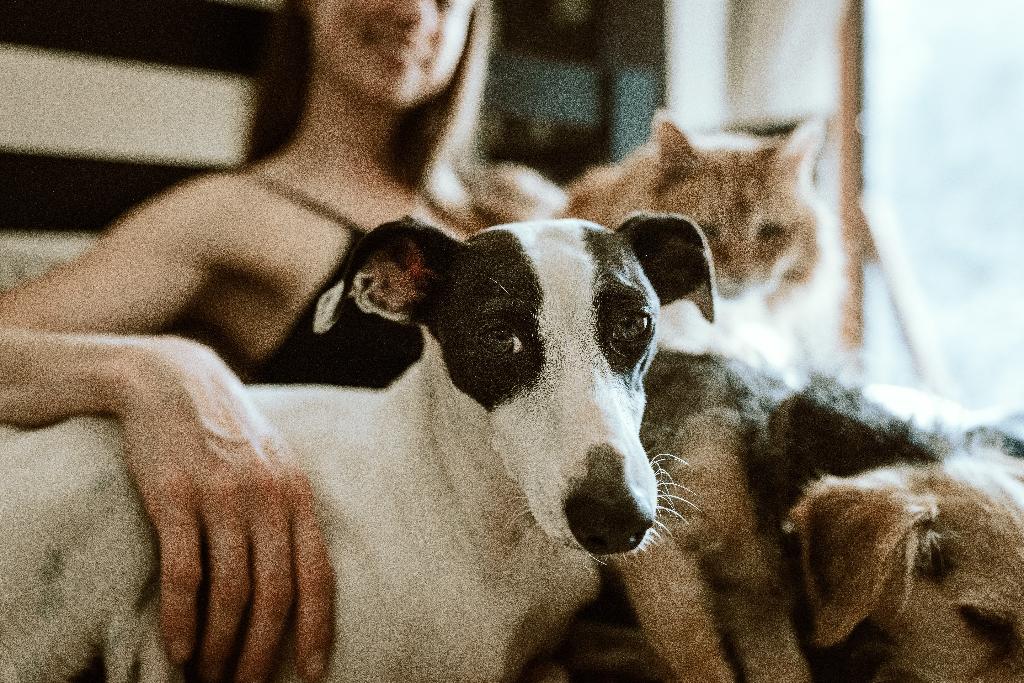 dog-sitting, pet-sitting